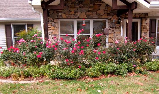Bud's Roses