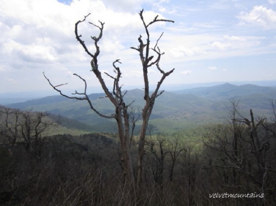 Beautiful tree facing Mt. Pisgah