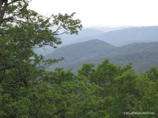Looking out to Mt. Pisgah with a Tree Blooming Green