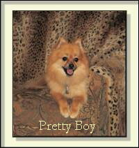 picture of Pretty Boy, the dog