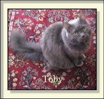 picture of Toby, the Cat