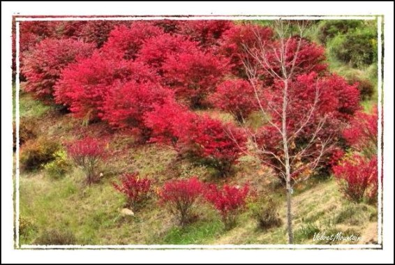 picture of Fall Reds