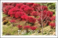 picture of Fall 2012 Colors