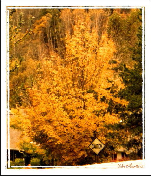 picture of Fall Gold colors