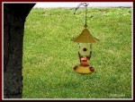 Humming Bird Feeder