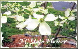 Dogwood - NC State Flower
