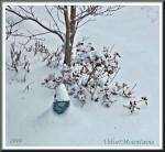 2nd Snow .jpg