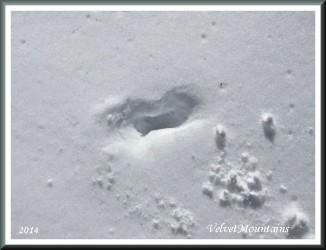 Mystery Footprint