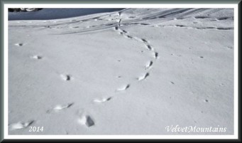 Wondering mystery Footprints