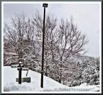 2nd Snow 2014.jpg
